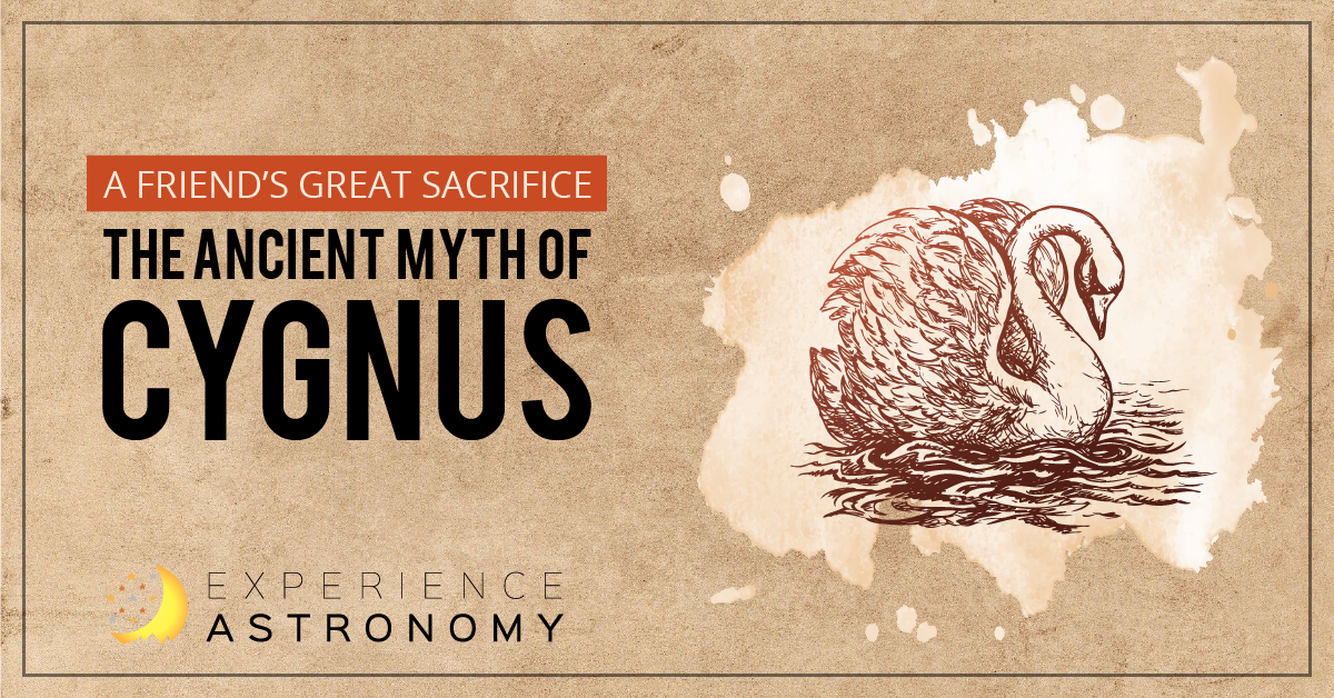 A Friend's Great Sacrifice: The Ancient Myth of Cygnus