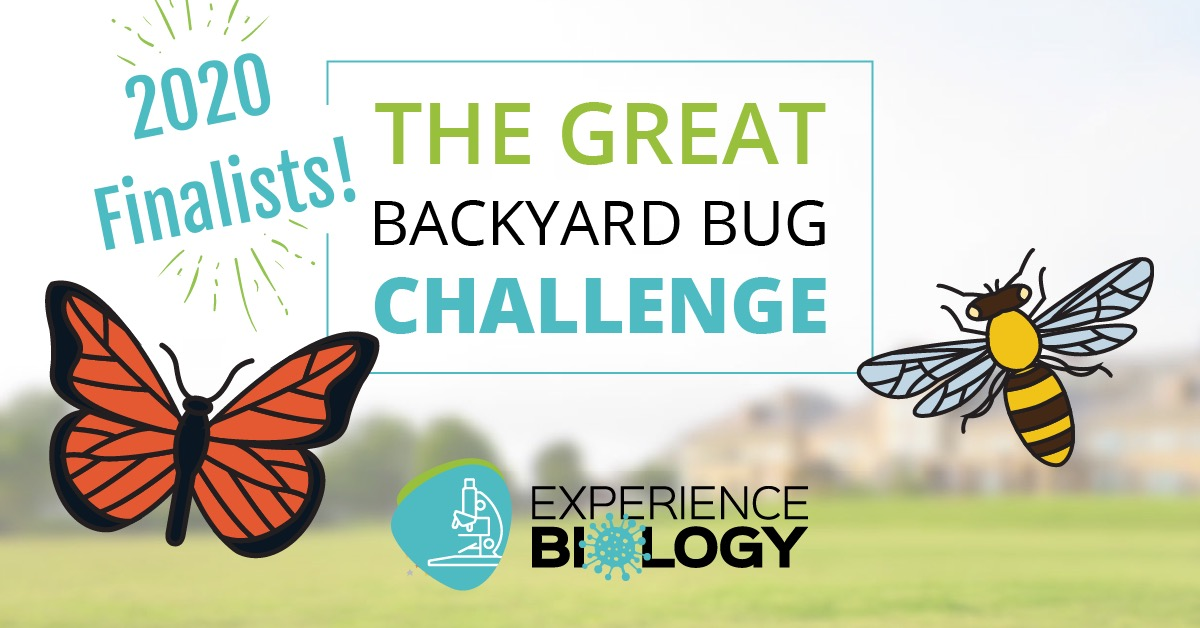 Backyard Bug Challenge Finalists 2020